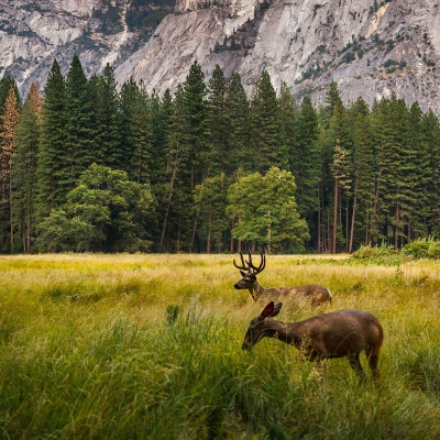 National Park Tours